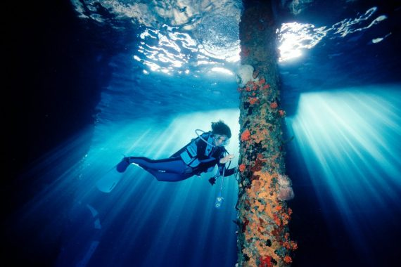 Dr. Sylvia Earle By David Doubilet Rolex Testimonee Mission Blue Perpetual Planet - Mamic 1970
